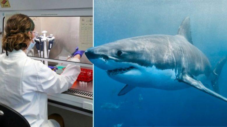 Rreth 500 mijë peshkaqenë mund të theren për prodhimin e vaksinës kundër coronavirusit